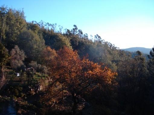 Het terrein was volledig overwoekerd, maar na het opschonen werd het een prachtige plek, met een eigen riviertje met waterval, een eigen bron en fruitbomen waaronder sinaasappels en olijven